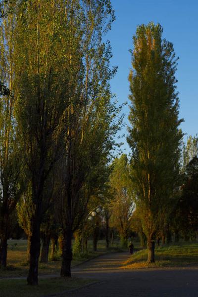 2010_fall