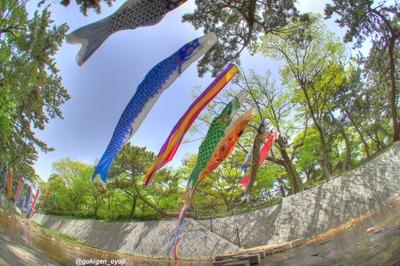 Koi_20110502