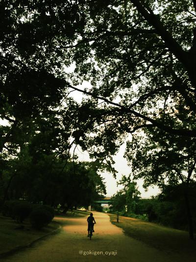 Run2013