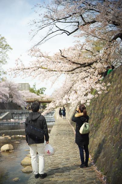 Sakura201401s