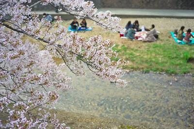 Sakura201404s