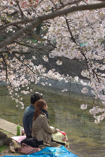 Sakura201411s